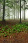 Z lesů vod a strání